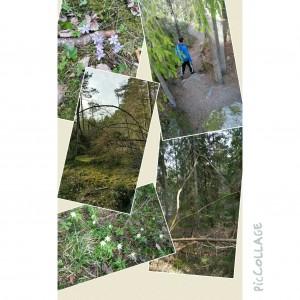 Urskogen 22 april
