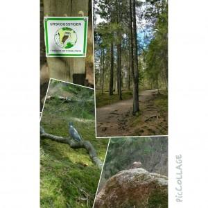 Urskogen 23 april