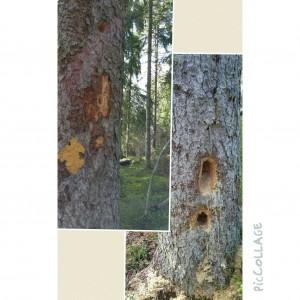Kul hål i träd 6 maj