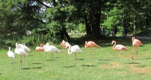 Så fina Flamingos!
