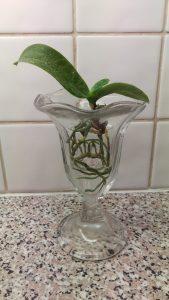 Orkidéer i vatten, spännande!