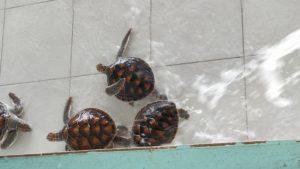 På sköldpaddsön