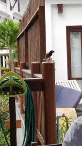 Fågelbesök