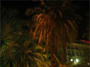 I parken utanför hotellet, så vackert!