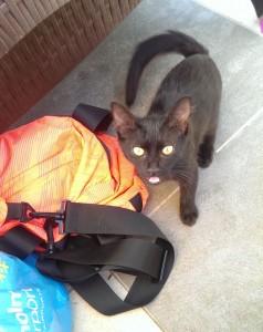Svart katt vid väskan
