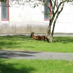 Bambi inne i Stockholm!